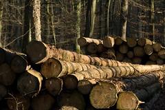 ckuchem-7070 (christine_kuchem) Tags: abholzung baum baumstmme bume einschlag fichten holzeinschlag holzwirtschaft wald waldwirtschaft