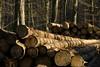 ckuchem-7070 (christine_kuchem) Tags: abholzung baum baumstämme bäume einschlag fichten holzeinschlag holzwirtschaft wald waldwirtschaft