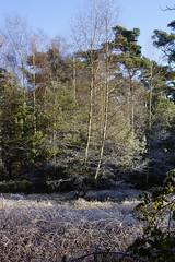 Wandeling Gele Route Oisterwijk 04-12-2016 (marcelwijers) Tags: wandeling gele route oisterwijk 04122016 noord brabant nederland niederlande netherlands bos paybas wanderung wald wood winter winterse landschap natuurmonumenten wandeltocht wandelen boswandeling vennenroute vennen