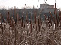 DSCF7950 (EgoR ErroR) Tags: ukraine ukr uzhgorod fujifilmx fuji fujifilmxf1 fujifilm xf1 xf