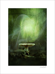 once upon a time    II (Zino2009 (bob van den berg)) Tags: mushroom paddo paddestoel forest light smoke texture creative creation wald deep dark holland zino2009 bobvandenberg