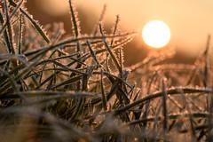 Kälte und Wärme (webpinsel) Tags: frost herbst landschaft lüdinghausen morgenstimmung münsterland natur seppenrade sonnenaufgang