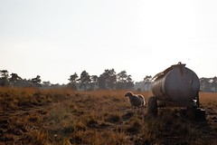 Kalmthout (Luc Herman) Tags: kalmthout heide flanders travel