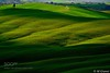 Green of Siena (l3v1k) Tags: ifttt 500px field landscape waves green panorama shadows greenscape arbia mucigliani toscana italy italia italian tuscany siena asciano crete senesi leonina site transitoire valdarbia cor magis tibi sena pandit