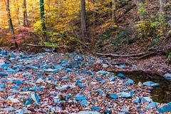 Hilton Area (11-10-16)-031 (nickatkins) Tags: fall fallcolors fallcolor fallfoliage autumn water sun sunlight stream