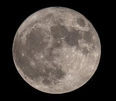 Supermoon; 14.11.2016 (Michal Jeska) Tags: supermoon moon mond ksiezyc vollmond supervollmond luna lunar pentax q q10 mto11ca mc mto 11ca 1000 1000a mto1000 mirror lens maksutov maksutow teleskop telescope m42 mf manual focus russian soviet 1000mm f10 100 10 russentonne ksiyc