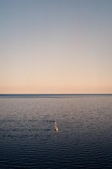 sail (MitchBoudreau) Tags: water boat lake ontario canada toronto film filmphotography 35mm sail sky minimal small composition beautiful 35mmfilm fujifilm vibrant lines