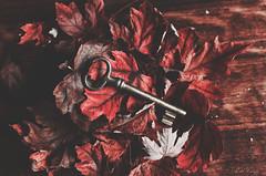 Llave del otoo. (A. del Campo) Tags: nikon nikkor nikond7000 key otoo autumn madera stilllife stillife bodegn composicin composition llave hojas leaves luz sombra light shadows 35mm