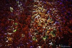 DSC04220 (Twareg) Tags: 2016 aboretum bpw enchanted forest westonbirt bathphotowalk gloucestershire england