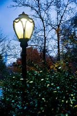 Blue Lamp (wyojones) Tags: manhattan newyork newyorkcity centralpark lamp light lamppost blue bush dusk
