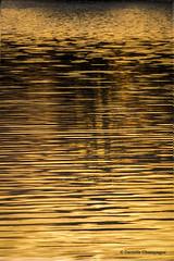 Feuille d'or  DSC_6079w  Explore No. 94 (Danielle Champagne) Tags: sunset coucherdesoleil daniellechampagne parcdesrapides montreal