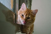 (ChCh Chen) Tags: cat cats kitten kitty lifestyle 50mm zm sony