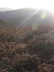 (Turbogirlie) Tags: longmynd shropshire shropshireaonb malcomsaville lonepine hills churchstretton nationaltrust moors moorland heather caercaradoc mountains mountainponies wildponies findyourepic walking hiking autumn winter