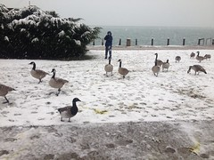 A Brant and my brother (kidbirder) Tags: