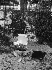 Piccole storie di miseria (sirio174 (anche su Lomography)) Tags: miseria povertà protesta proteste individualismo difficiltà como italia italy zorki4 zorki