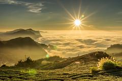 阿里山雲海 (hosihane) Tags: 台灣 嘉義阿里山 頂石桌 雲海 日落 陽光 茶園 廟 山 步道 芒花 天空