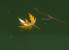 Floating Reflections. (Omygodtom) Tags: abstract reflection art texture nature oregon reflections river season yahoo leaf google oak nikon flickr dof explorer existinglight pdx tamron facebook tamron90mm d7000
