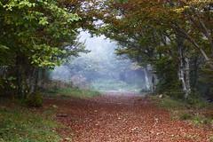 Sentiero d'autunno a Iavello (pisolix) Tags: autumn fog nebbia sentiero autunno