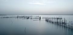(jazzypixels) Tags: valencia lagos albufera largaexposición