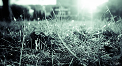 graaaaas (cristiansamoilescu) Tags: city flowers grass nikon post centre serbia romania grainy belgrade resita procces d7000