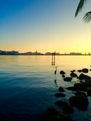 Good morning, Florida #florida #brickell #miami (Bruno Abreu) Tags: