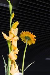 Flower (p.fabian) Tags: island iceland islandia reykjavik reykjavk sland concerthall