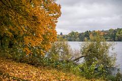 Touched by autumn (Storkholm Photography) Tags: autumn trees lake fall nature clouds landscape 50mm nikon october europe colours sweden stockholm scandinavia leafs 50mmf14 riddarfjärden kungsholmen mälaren d610