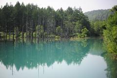 Blue Pond (), Biei, Japan (alvinclsmy) Tags: blue summer lake japan pond nikon hokkaido biei 2014 bluepond d700 nikond700 alvinclsmy