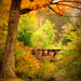 Autumnglow