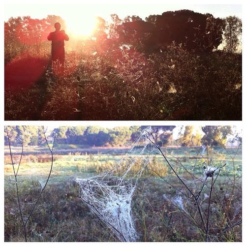 Corsetta nel #parco #appiaantica a vedere le #larve che tessono la #tela #natura #appia #antica #foto  #images #immagini