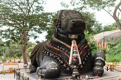 Taureau Nandi (Marmontel) Tags: bull nandi karnataka mysore inde chamundi
