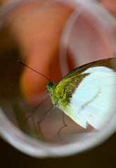 Butterfly (col&tasha) Tags: plant students ecology field university centre course aberystwyth borneo tropical sabah nationalbotanicgardenofwales danau trec girang