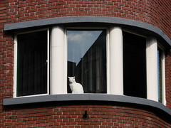 Window Cat (indigo_jones) Tags: street holland window netherlands corner cat kat utrecht nederland curve raam