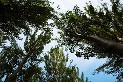 October trees. (Joana Ginart) Tags: park autumn trees sky rain photography photo lluvia october day arboles photographie walk dia paseo cielo otoño octubre fotografia mataró parc fotografía