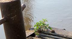 Sommerspaziergang 2014 (Mahashakti Uta Engeln) Tags: wasser sommer steg spaziergang 2014 pfosten wachstum papenburg badmeinberg seeschleuse