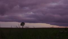 nuages violets