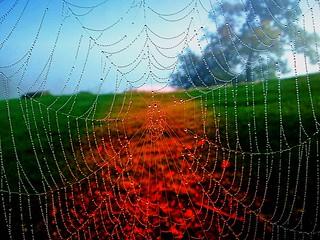 cobweb  -  Spinnwebe