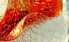 Frozen (in sunshine) Calla Lily  {EXPLORED} (Cheri Sundra: Guerrilla Historian) Tags: sun ice nature sunshine canon outside outdoors frozen lily canonrebel callalily passionflower canoneos canoncamera frozenflowers explorewinnersoftheworld cherisundra