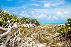 Carenero (Leandro Rinco) Tags: sea vacation mar venezuela frias 7d viagem isla paraiso vacaciones playas losroques arquiplago canon7d archipielagodelosroques caribevenezuelano praiasparadisiacas