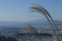 (Sadaigaue) Tags: city japan canon landscape kyoto day view ciudad paisaje dia  vista japon