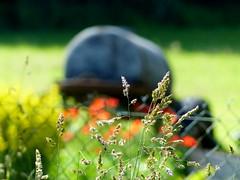 (MAGGY L) Tags: fence jardin poppies clotre coquelicots citerne dmcfz200
