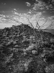 boolcoomatta sept 2014 - 9291371 - wiperaminga (liam.jon_d) Tags: abhf mono arty australia australian australianbushheritagefund bw bha billdoyle blackandwhite boolcoomatta boolcoomattareserve bushheritage bushheritageaustralia conservation conservationreserve desert eremophilaloop landscape monochrome outback outbacklandscape sa semiarid southaustralia southaustralian westernloop wiperaminga wiperamingahill 100 most recent interesting 100mostrecentmostinteresting 100mostinterestingblackandwhite mrmijan14 pickmeset mostintblackwhiteimset popularimset mostinterestingsaimset