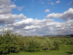 Saratoga Apple Orchard (arda292000) Tags: autumn sky fall clouds orchard adirondacks upstatenewyork apples applepicking appletrees adirondackmountains upick saratogaapple
