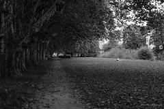 (der_w) Tags: street people urban bw river shift tilt fluss neckar tse personen tbingen tiltshift badenwrttemberg schwarzweis tse90mm flus neckarinsel streetfotography