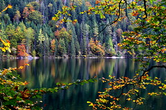 Fall is here in Austria (kyuen13) Tags: