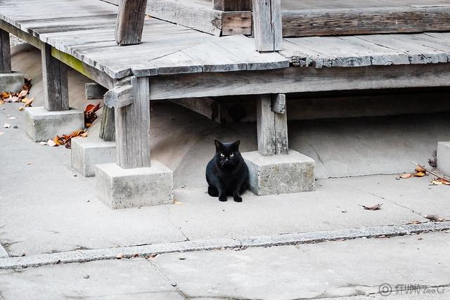 Today's Cat@2014-11-07