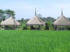 """Petit déjeuner dans les rizières <a style=""""margin-left:10px; font-size:0.8em;"""" href=""""http://www.flickr.com/photos/83080376@N03/15559281021/"""" target=""""_blank"""">@flickr</a>"""
