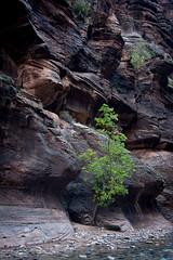 Zion Narrows II (Ron W. Craig) Tags: national zion zionnationalpark narrows thenarrows parkthe