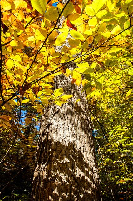 Guthrie Woods Memorial Woods Nature Preserve - October 25, 2014