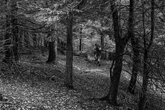 Entropy Below the Canopy (Brady Baker) Tags: park camping trees white black mountains green nature river spring state hiking pennsylvania worlds end appalachians